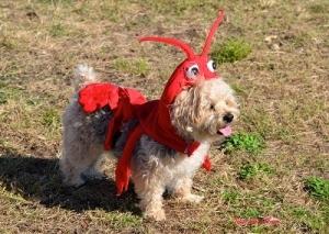 Dog Costume - Bower Bash