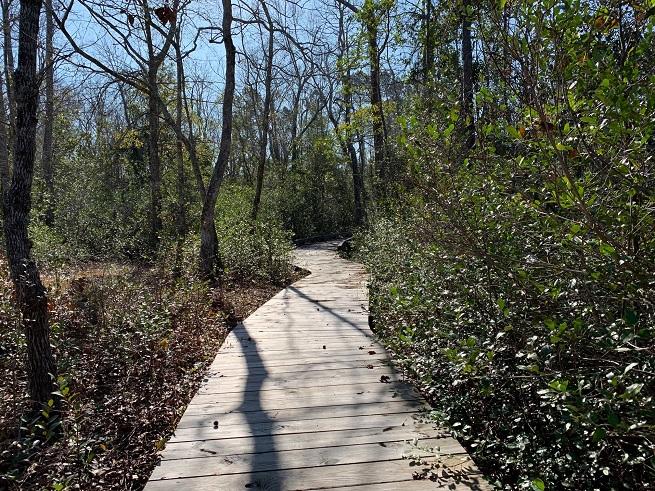 Trail walk 2
