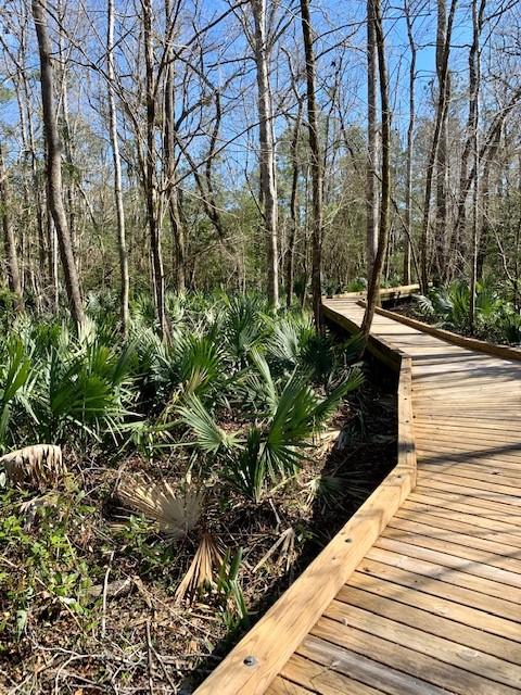 Palmetto Creek Nature Trail 2